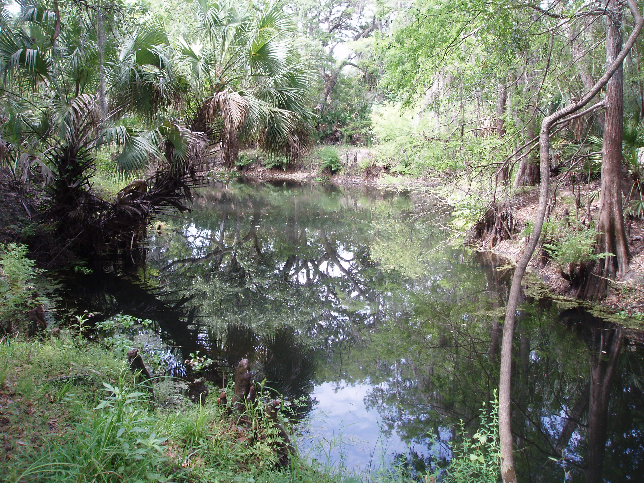 Cypress Creek Conservation Area