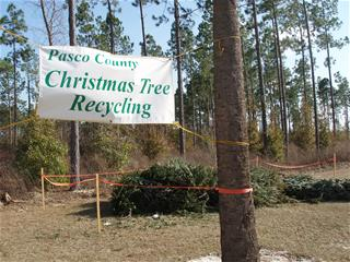 Christmas Tree Drop Off at Wesley Chapel Regional Park